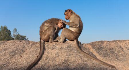 monkey higiene  photo