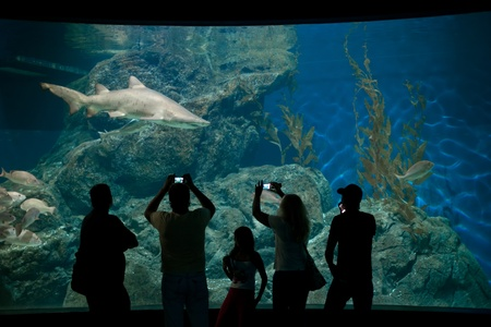 sea life centre: Visitors taking photos of shark in aquarium Editorial