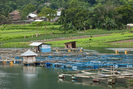 barell: LAKE BATUR, BALI - JANUARY 21. Men taking care of their fish farm on Lake Batur on January 21, 2012 in Bali, Indonesia. Fish farming is their main source of subsistence on the lake. Editorial
