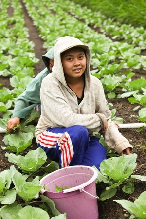 LAKE BATUR, BALI - JANUARY 21. Portrait of young woman on Lake Batur on January 21, 2012 in Bali, Indonesia. Children help their parents farming after school.