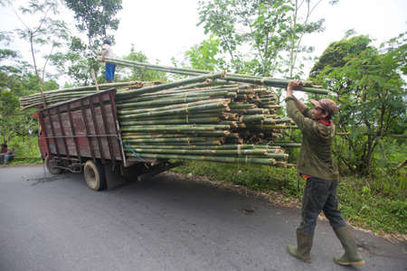 BALI - JANUARY 22. Men loading bamboo for construction in Bali on January 22, 2012 in Bali, Indonesia. Bali still uses bamboo in its construction of houses and other structures. Stock Photo - 12444901