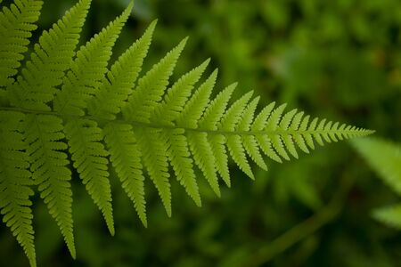 A beautiful fern leaf in the undergrowth of a tropical rainforest Stock Photo - 12771411
