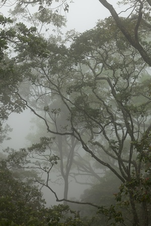 Branches and trees in Balinese misty rainforest, Indonesia Standard-Bild