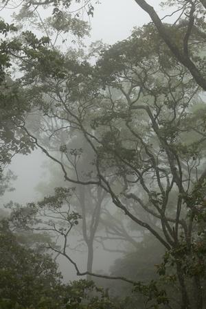 Äste und Bäume im balinesischen nebligen Regenwald, Indonesien