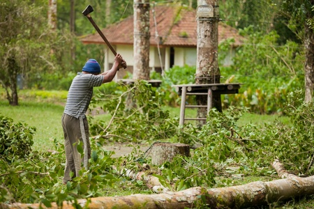 BALI - JANUARY 25. Man cleaning fallen tree after big storm on January 25, 2012 in Bali, Indonesia. Seven people died by falling trees that day. photo