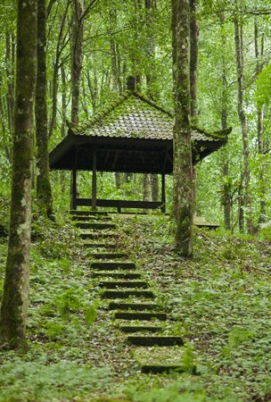 Stairs leading to small Asian contruction in rainforest in Bali, Indonesia.