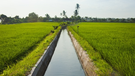 Rice field irrigation canal in paddy fields in Bali, Indonesia.
