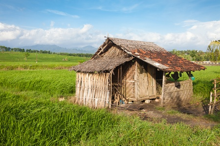 Small bamboo hut in rice paddy field in Bali, Indonesia Stock Photo - 13056413