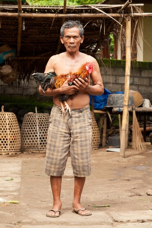 however: BALI - FEBRUARY 1. Proud owner showing off his prime cockfighting rooster on February 1, 2012 in Bali, Indonesia. Cockfights are illegal, however are tolerated out of tradition.
