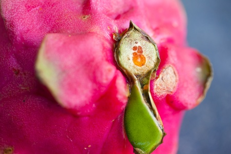 macro close up of pink dragon fruit Stock Photo - 13383529