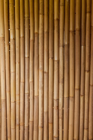 Bamboo sticks serving as background Stock Photo - 13677952