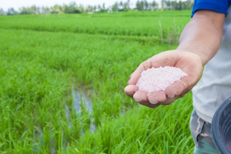 BALI - FEBRUARY 15. Rice farmer using nitrogen fertiliser on his field on February 15, 2012 in Bali, Indonesia. The UN says world rice harvest for 2012 should top 2011 crop, thanks to gains in Asia. Reklamní fotografie