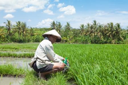 farm worker: Farmer hydrating after hard work in paddy field