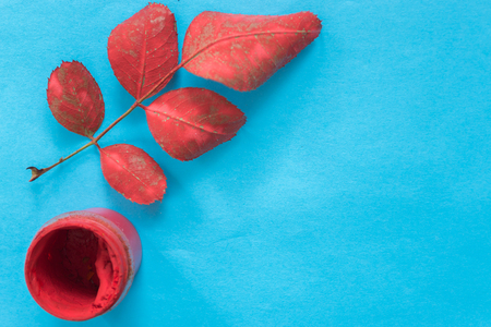 Red rose leaf on a blue background Stock Photo