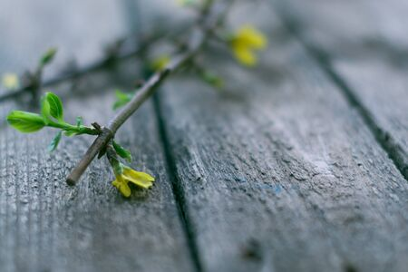 The branches of currants on a wooden background