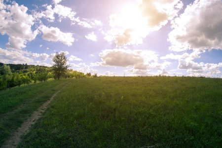 riverside trees: Sunny summer landscape on a meadow near a dirt road Stock Photo