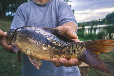 goodluck: The fisherman is holding a catch - a large carp