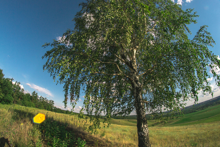 huge tree: Summer landscape in nature on a sunny afternoon at a fisheye Stock Photo