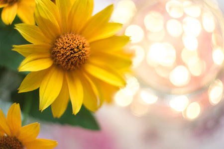 Yellow flowers macro with blurred background and bokeh stock photo stock photo yellow flowers macro with blurred background and bokeh mightylinksfo