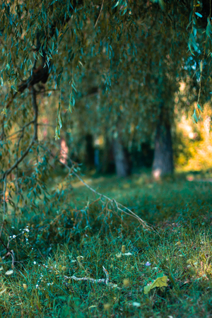 abstrait: Summer meadow in the sun with blurred background Stock Photo