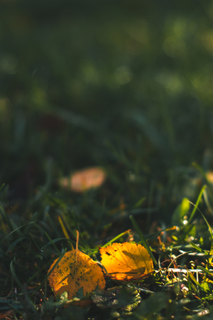 Autumn background. Dry leaves on the ground with a blurred background
