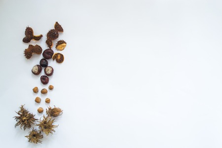 Chestnuts and hazelnuts on a white background