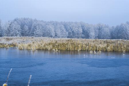 Morning landscape pond in a frosty winter morning