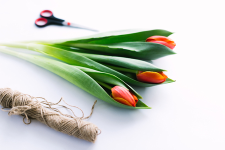 Tulips on a white background with a rope. Isolate