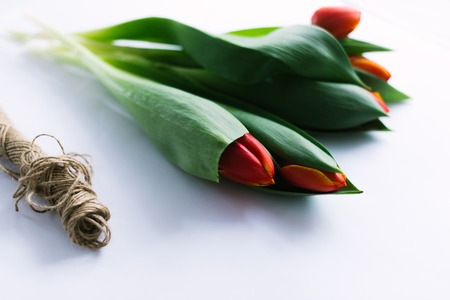 Tulips on a white background with a rope.