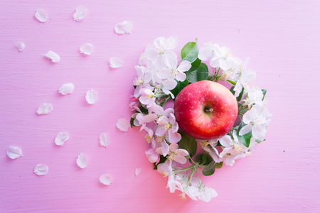 Blossoming apple tree branch and apple on a pink wooden background.