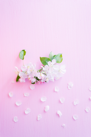 Flowering apple tree branches on a pink wooden background.