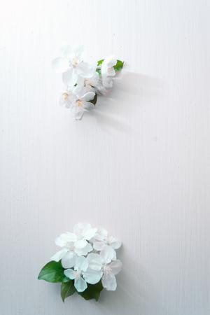 Flowering apple tree branches on a blue wooden background.