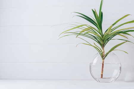 A branch of palm tree in a round glass vase on a white background.