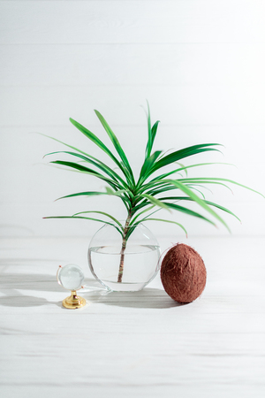A branch of a palm tree in a glass vase with coconut.