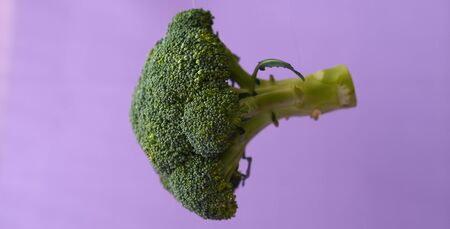 Fresh broccoli in the air on a purple background.