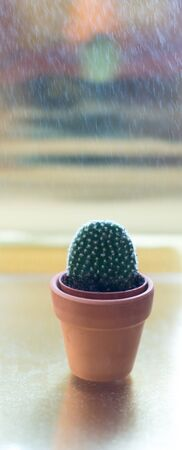 Cactus in a jamb on a golden background.