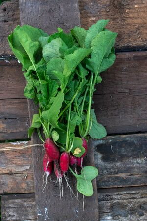 Radish with a summer house on a wooden old background