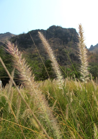 whiff: Grass pennants Beautiful breeze in the valley
