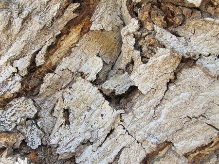Wood naturally beautiful