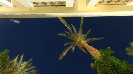Palm tree against the background of the starry sky