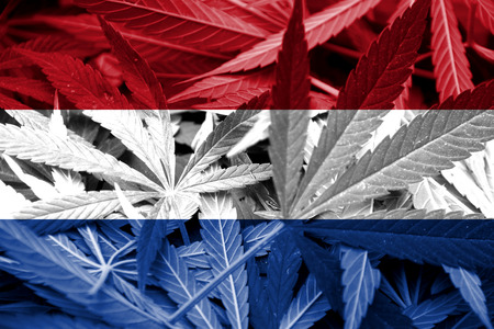 leaf marijuana: Bandera holandesa sobre el cannabis Legalizaci�n de Drogas fondo la pol�tica de la marihuana Foto de archivo