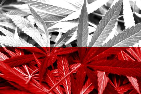 drug dealer: Poland Flag on cannabis background  Drug policy  Legalization of marijuana