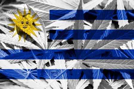 Uruguay Flag on Cannabis background photo