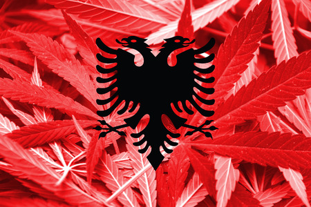 smuggling: Albania Flag on cannabis background. Drug policy. Legalization of marijuana