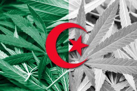 thc: Algeria Flag on cannabis background. Drug policy. Legalization of marijuana Stock Photo