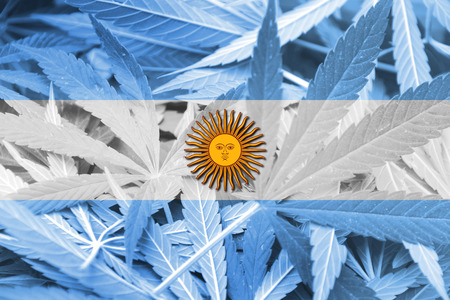 education policy: Argentina Flag on cannabis background. Drug policy. Legalization of marijuana
