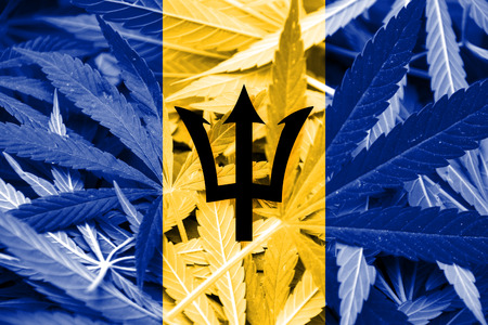 smuggling: Barbados Flag on cannabis background. Drug policy. Legalization of marijuana Stock Photo