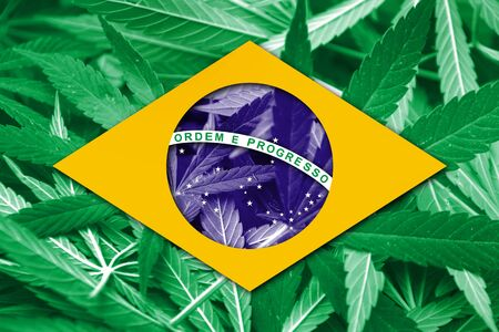 brazil symbol: Brazil Flag on cannabis background. Drug policy. Legalization of marijuana