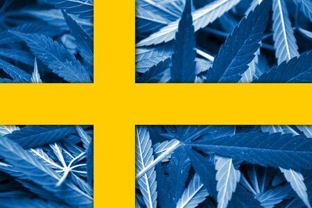 bandera suecia: Bandera de Suecia sobre fondo cannabis. La pol�tica de drogas. La legalizaci�n de la marihuana