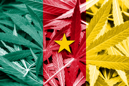 drug dealer: Cameroon Flag on cannabis background. Drug policy. Legalization of marijuana
